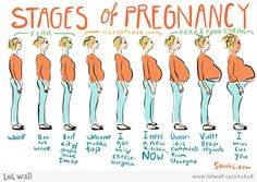The Stages of Pregna