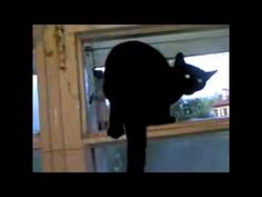 Cat gets caught barking and resumes meowing. Hahaha... busted.