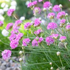 Pink flowers can add a bold or delicate touch to the garden depending on which shades you use: http://www.bhg.com/gardening/design/color/pink-flower-garden-ideas/?socsrc=bhgpin041114pinkflowers
