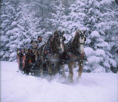 Sleigh ride - I should put this under my bucket list.  First, go to place that actually snows.  Second, ride with Husband in sleigh.