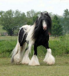 Beautiful horse Belgian