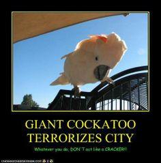 Bird Beauty And Humor