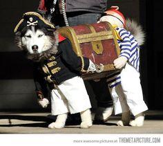 Best dog costume, ever.