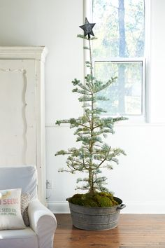 The PERFECT little natural tree!  So sweet...