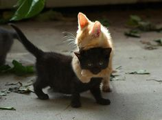 Sweet baby kitties playing together ♥♥