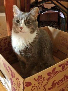"""Adorable!: """"If I fits, I sits. >^,,^< """" freshdirect box"""