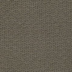 """Carpeting in the Caress Collection style """"Dunes"""" color Alaskan Musk - by Shaw Floors"""