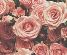iphone backgrounds, pink flowers, pink roses, valentine day, color, dusty pink, dusty rose, garden, floral