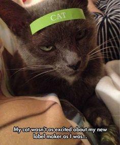 This cat is not amused
