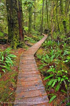 Boardwalk along Rainforest Trail, Pacific Rim National Park, Vancouver Island, British Columbia, Canada