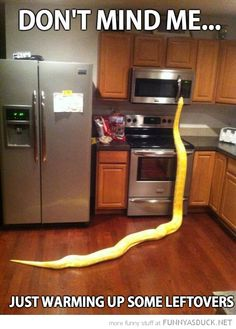 OMG kitchens, anim, houses, heart, hot pockets, funny pictures, pet, funni, snakes