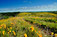 Ride a horse along a trail through the Arbuckle Mountain Range in Sulphur and see amazing Oklahoma scenery.