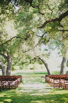 Outdoor wedding under oak trees. Very similar to Sawgrass Lake park or Floria Wylie Park in St Petersburg, Florida!