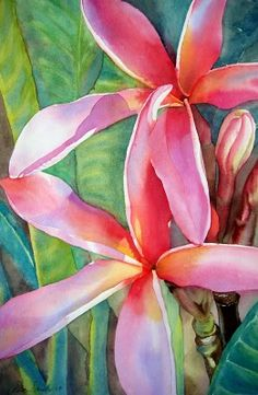 Plumeria in pink watercolor