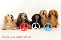 Peace and Independence