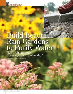 Trap rainwater and grow your own patch of prairie with a small rain garden in your yard.