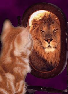 A Thought - On Confidence..  If you are insecure, guess what? The rest of the world is too. Do not overestimate the competition and underestimate yourself. You are better than you think. - T. Harv Eker