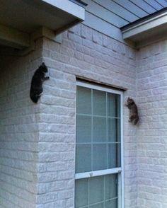 Ninja cats are everywhere!