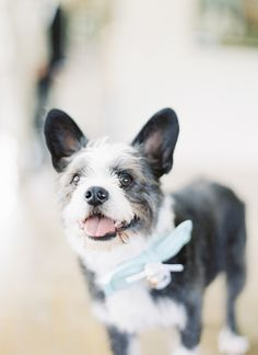 dog with a bow + bell! | Sweet Tea Photography #wedding