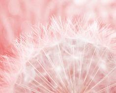 Dandelion Art Print  - Pink Soft White Bokeh Nursery Girl Room Home Decor Wall Art Surreal Spring Garden Photograph on Etsy, £15.33