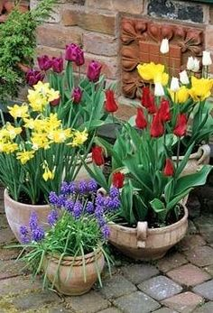 spring bulbs on patio