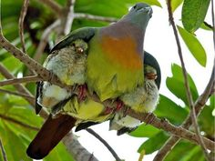 The Wings of Love psalms, bird, wing, god, mother, shelters