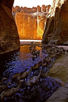 Camels resting at Guelta d'Archéï, Ennedi, Tchad