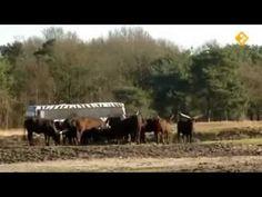 koekeloere: ik wilde dieren zien (thema dieren/dierentuin/wilde dieren)
