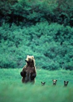 bears. Shut. The. Front. Door.