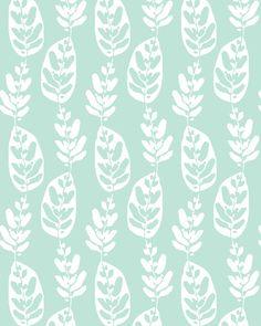 Peacock Plant | Allison Holdridge