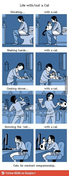 Life with/out a cat @Jenny...