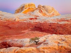 desert, tree, rock formations, color, national geographic