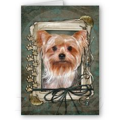 Happy Birthday - Stone Paws - Yorkshire Terrier Card