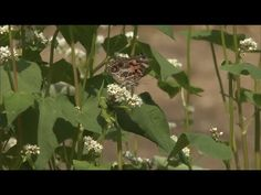 How to Attract Butterflies to Your Garden | At Home With P. Allen Smith