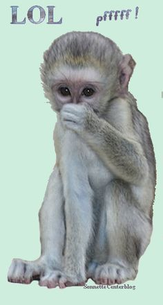 Happy monkey gif