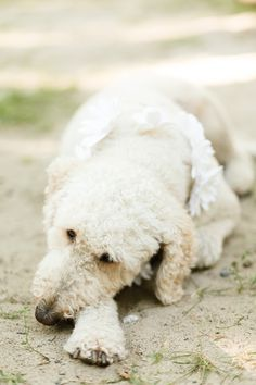 Photo by Joel Bedford; tired pup  #dogatwedding #outdoorwedding #weddingchicks http://www.weddingchicks.com/2014/01/06/weekend-wedding/