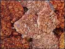 Amazing caramelized pecan ...cookies? bars? brittle? They're called Palanquetas con Nuez de Jalisco