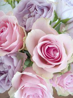 **Beautiful roses.
