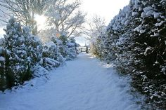Yorkshire Snow