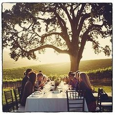 dinner party under the tree