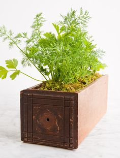 Here's my quick + easy DIY for making your own indoor kitchen garden using a vintage box/old drawer. Perfect for spring. #diy #garden #herbs #kitchen #plants
