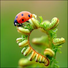 lady beetle on the spiral path...
