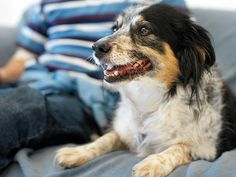 20 Questions to ask Before you Foster A Dog