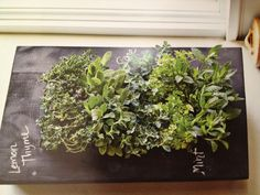 Vertical herb garden with chalkboard paint