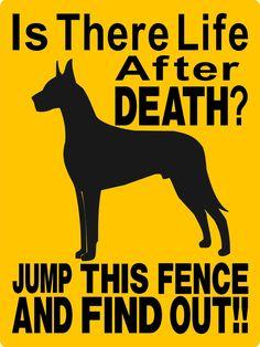 "{GREAT DANE Dog Sign 9""x12"" ""ALUMINUM"" 2514. $12.00, via Etsy}<3"