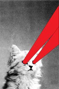 X-Ray Kitty | Bang-On.com