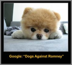 """Google """"Dogs Against Romney"""" to see what we're all about. *wag* *wag*"""