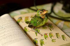 DSC_5741 published National Geographic Magazine 21nov 2012 by supratikC, via Flickr