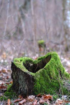 Broken heart of nature