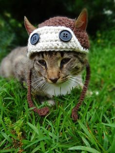 Hey, I found this really awesome Etsy listing at https://www.etsy.com/listing/152875463/aviator-cat-hat-dog-hat-aviator-cat-dog
